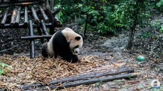 Ma visite de Chengdu 🇨🇳