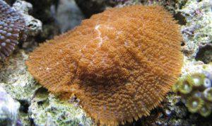 wamas coral frags frag swap
