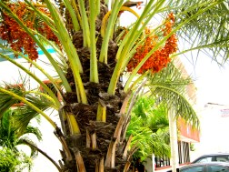 palms in mexico