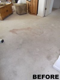 Frequently Asked Questions about Carpet Cleaning - Capital ...