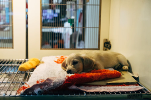 A dog in a pet shelter