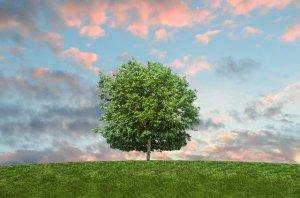 Big tree on a green field.