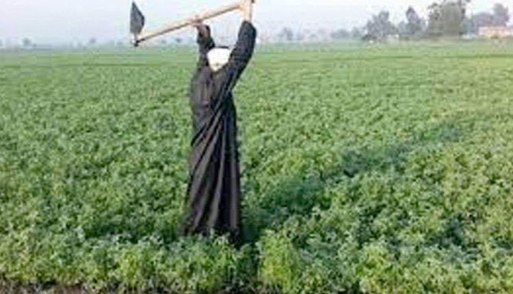 وزير الزراعة وجه بإنهاء مشروع هدهد المساعد الذكي للفلاح على المحمول