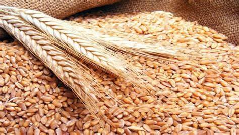 صادرات الحبوب الأمريكية