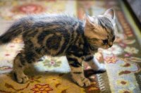 cat pee on rug | Roselawnlutheran