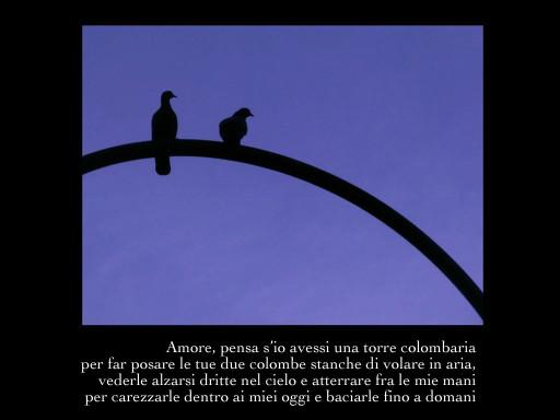 Canzone-delle-colombe-e-del-fiore