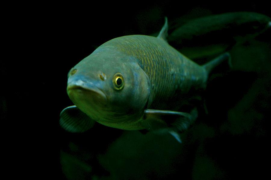 pesce-acquario-milano