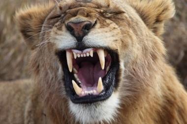 dente-di-leone