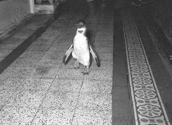 Un pinguino a Trieste di Chiara Carminati