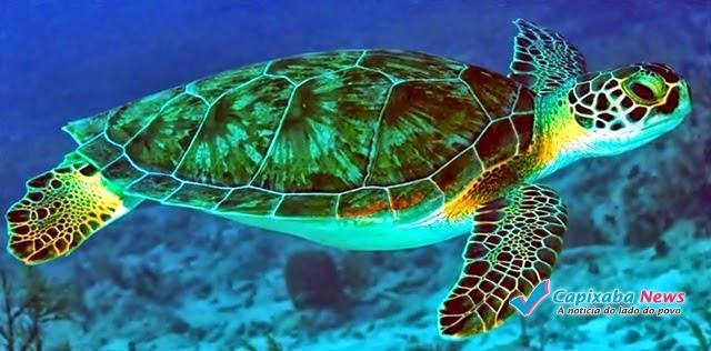 Dia Internacional das Tartarugas Marinhas é comemorado em Vitória