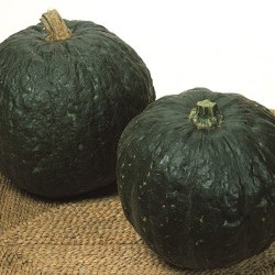 Zucca Iron Cup2€/kg