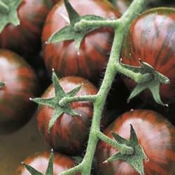 Pomodoro nero tigrato2,5€/kg