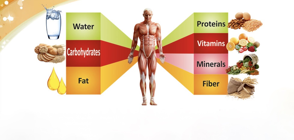 7-key-nutrients