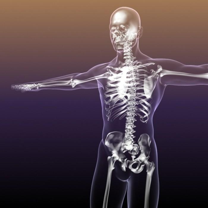human-skeleton-bones-3d-model-free-f