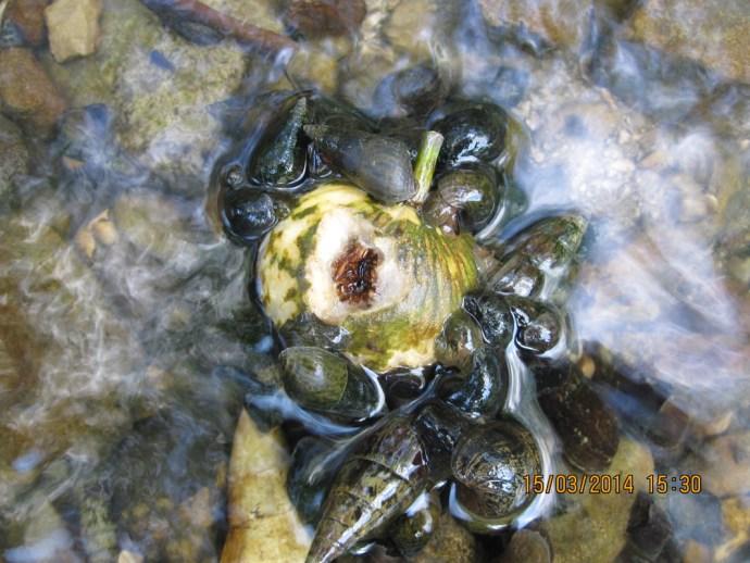 Snail detritivores in Palenque National Park