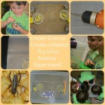Create a Cricket Habitat and Do a Fun Science Experiment