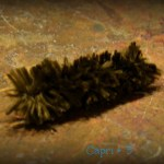 Science Fun-Learning About the Woolly Bear Caterpillar
