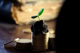 Geld wächst auch zum Teil auf Bäumen.
