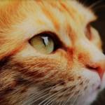 zooplus Aktie – Insider kaufen den Tierbedarfsspezialisten
