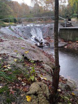 Sampling of debris that comes down the creek