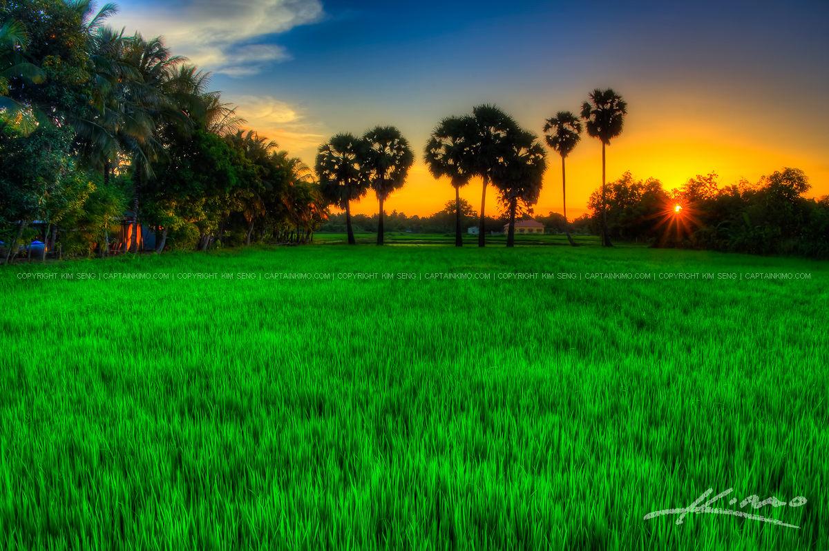 Cambodian Rice Field During Sunset in Battambang