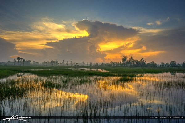 reflection over marsh pine glades