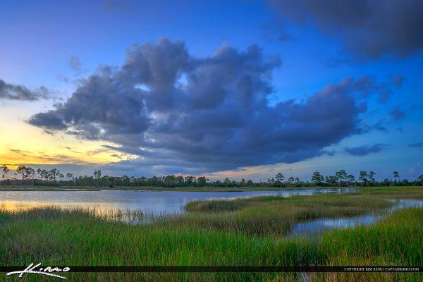 florida wetland landscape pine