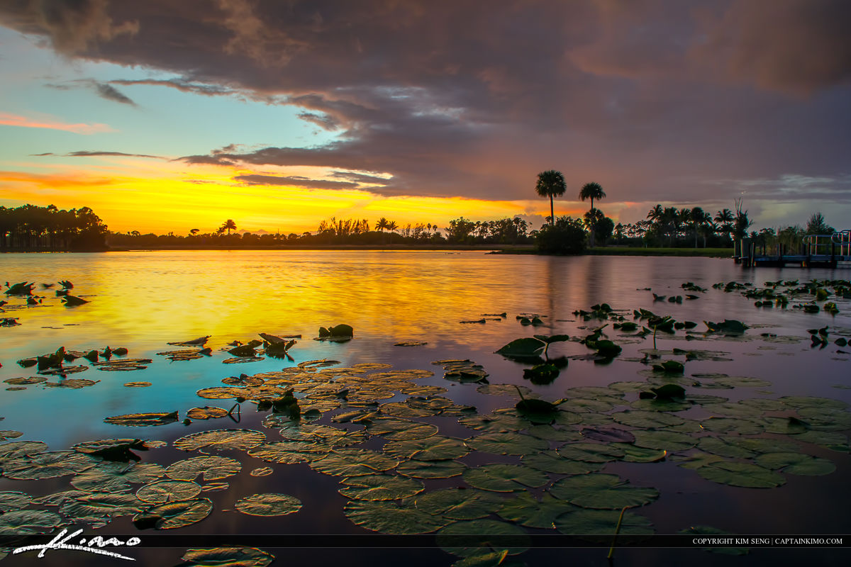 Lilypads at Lake Okeeheelee Park Sunset