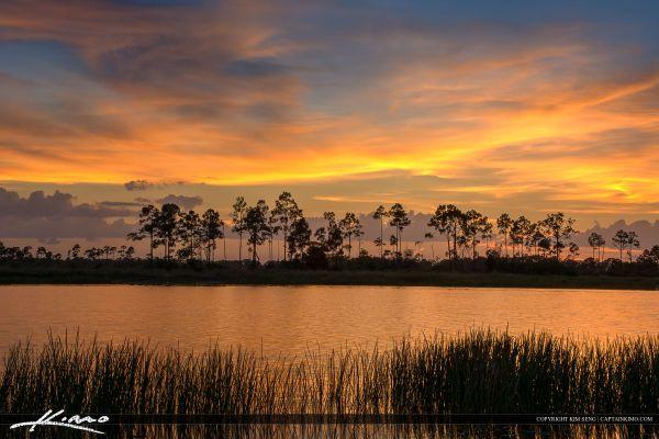 florida landscape hdr pine