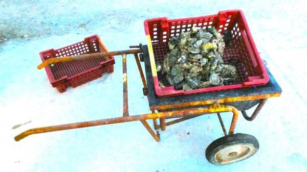 huitres 100% naturelles - captain marée - ostréiculteur - morbihan - vente directe - vente en ligne