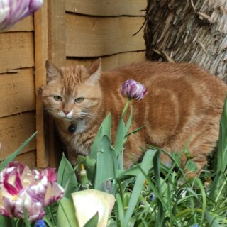 Merly in the Garden