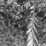 USMC sniper in bush T/Sgt John E Boitnott. (Milsurps 13-323)