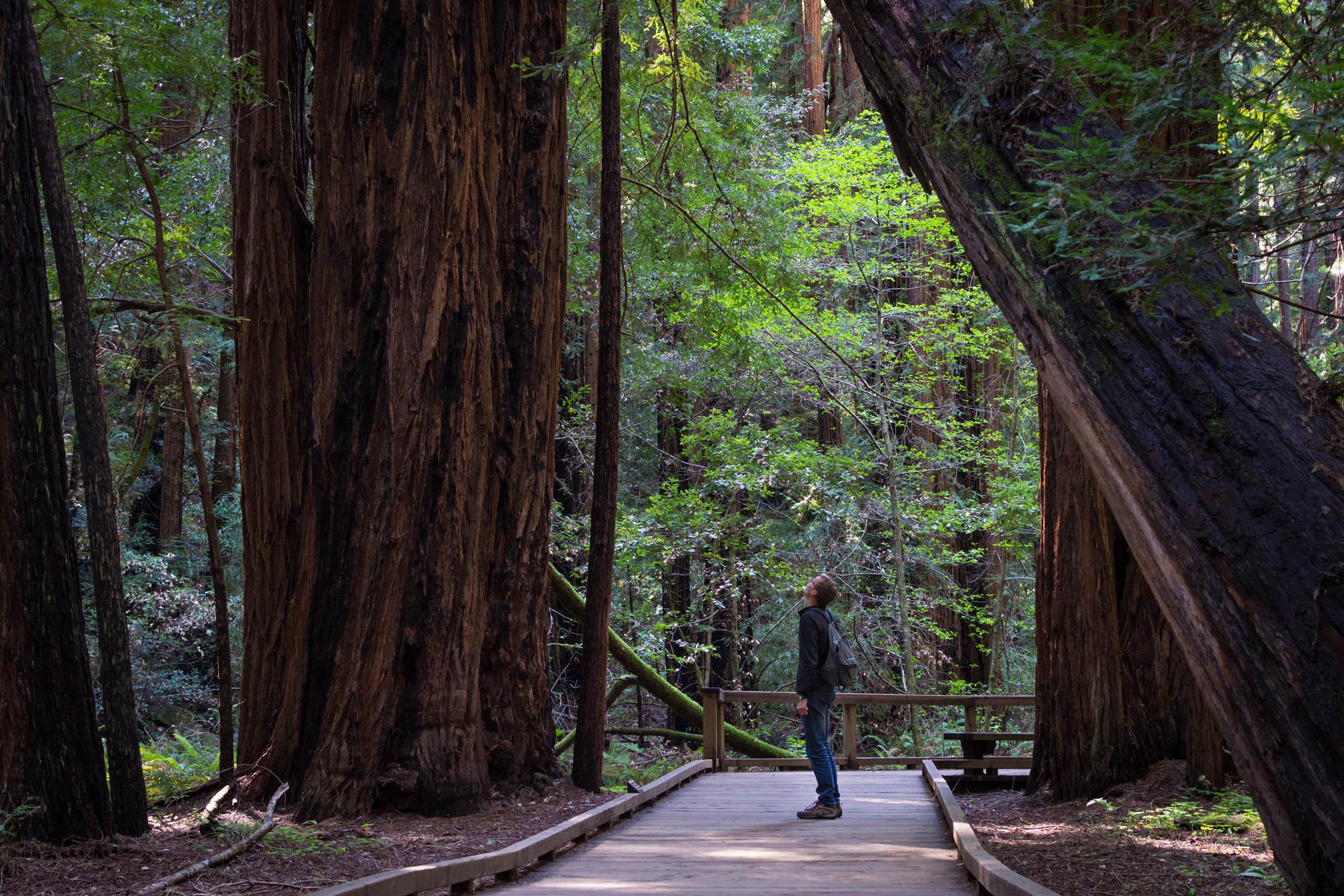 Les arbres impressionnent par leur hauteur