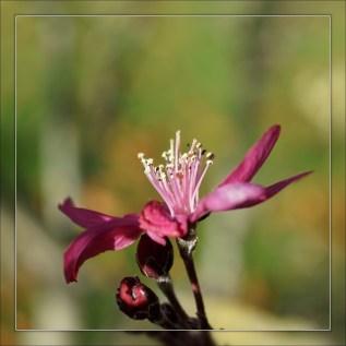 Une toute dernière fleur_Pommier d'ornement