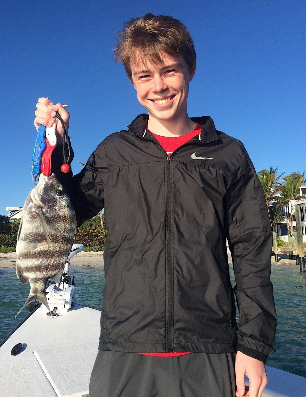 Sheepshead, Catch & Release, Sanibel Island Fishing Charters & Captiva Island Fishing Charters, Sanibel Island, Sunday, March 25, 2018.