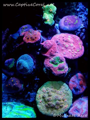 chalice_coral2016-04-23-08-47-30