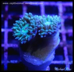 duncan_coral_DSC0117