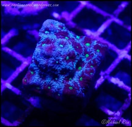 war_coral_DSC8836