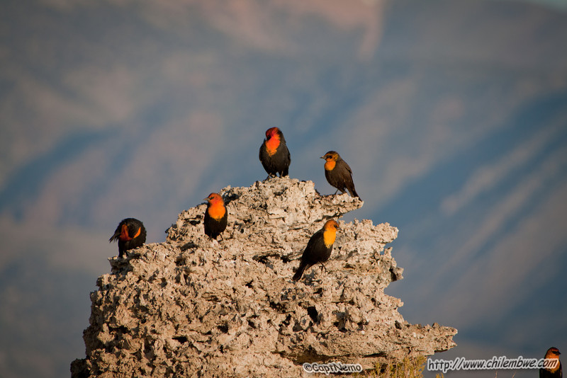 Birds at Mono lake