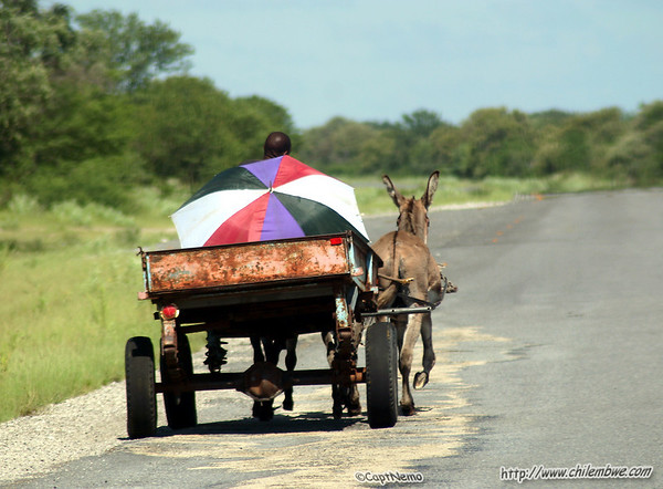 Donkey cart along the way