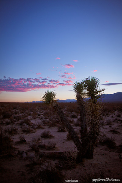 sunset on the high desert