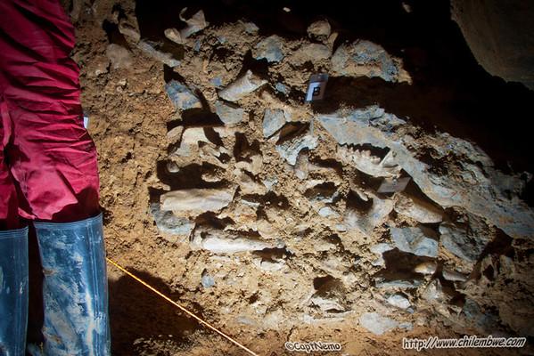 Bones in Byci Skala