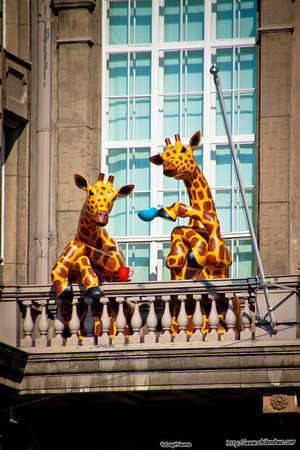 Two out of three giraffes approved of this message
