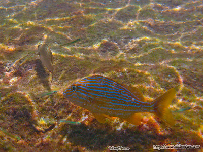 color fish, Xel Ha