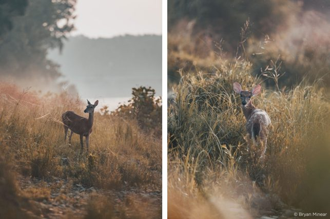 Bryan Minear - Capture One Color Grading