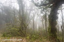 La selva - Bosque de las Nieblas - Parque Natural de los Alcorno