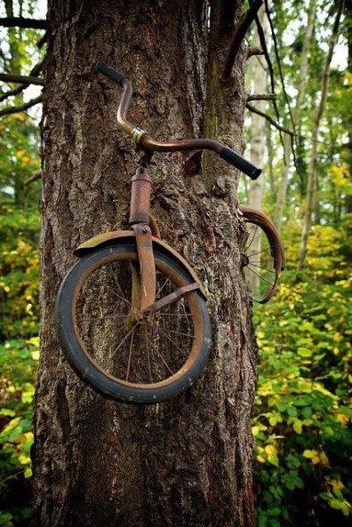bike_tree_synergy