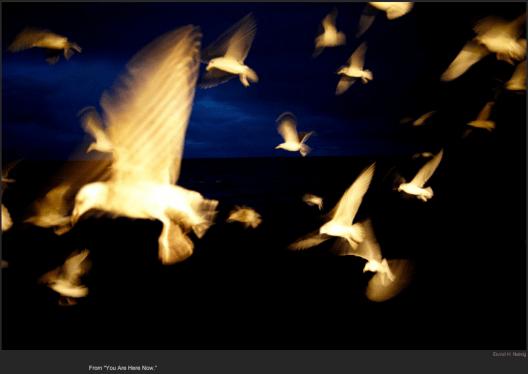 nytl_angelic_birds