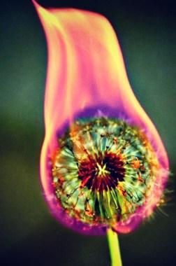 pollen_fire