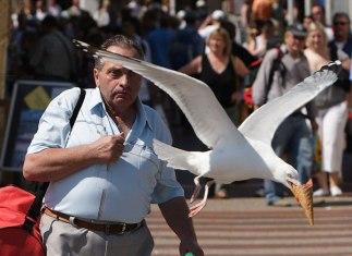 thieving_seagull_ice_cream
